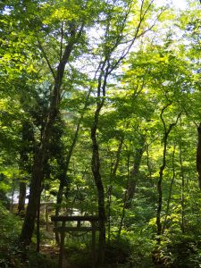 鎮守の森=天然林です